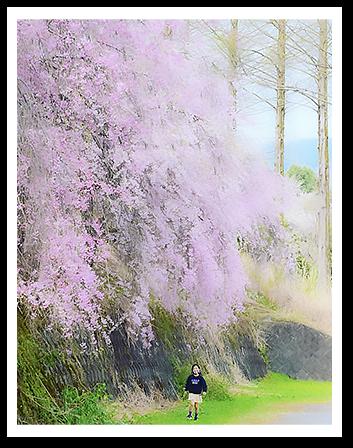 近くの枝垂れ桜の下で🌸💕