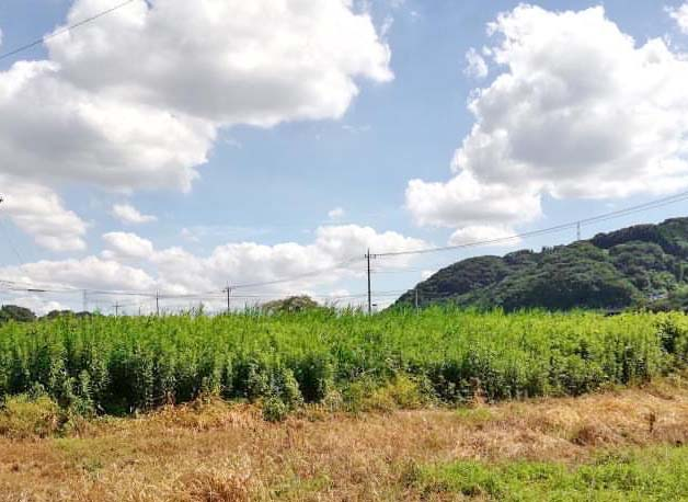 愛川町 ポケットに愛川 準農家 趣味 いきがい 農業 西田さん