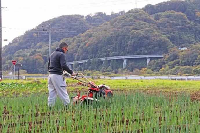 愛川町 ポケットに愛川 あいかわ準農家制度 趣味や生きがい 自給自足の農業